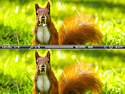 Squirrel Difference