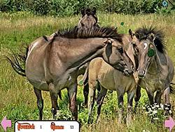 Hidden Rings Horses